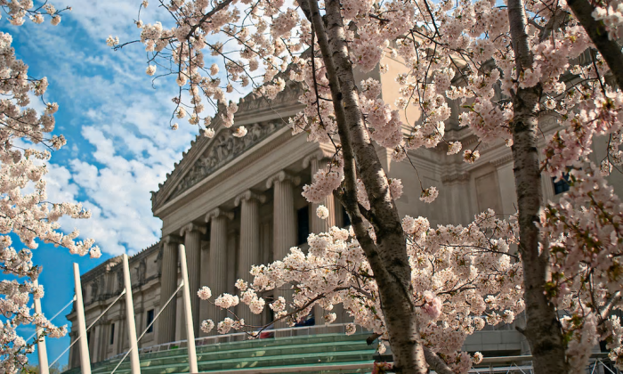Brooklyn Museum framed by cherry blossoms