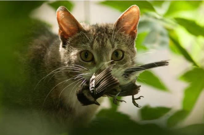 Cat with a dead bird in its mouth