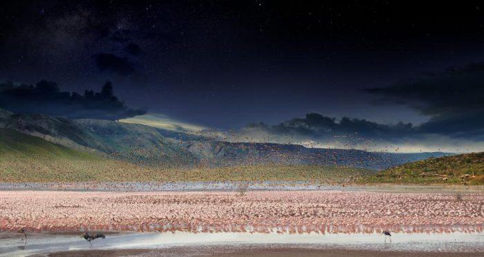 panorama of flamingos