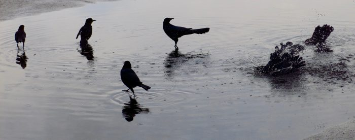 Birds freshen up in the parking lot of the Kennedy Space Center in Cape Canaveral, Florida.