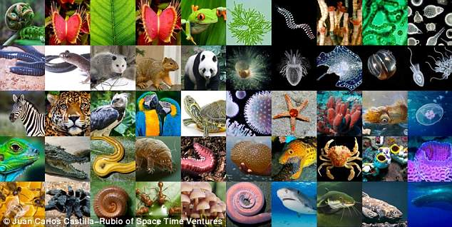 Composite photo of multiple species