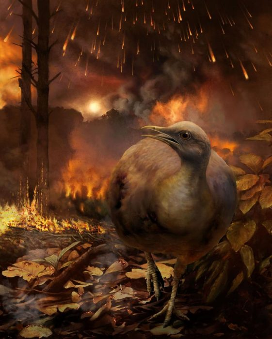 Bird in foreground of forest fire