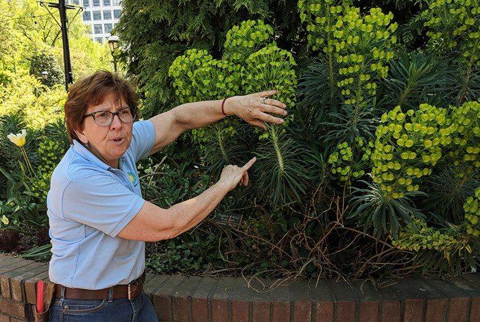 Janet describing a plant