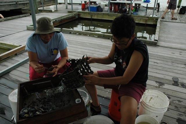Two researchers empy crab trap