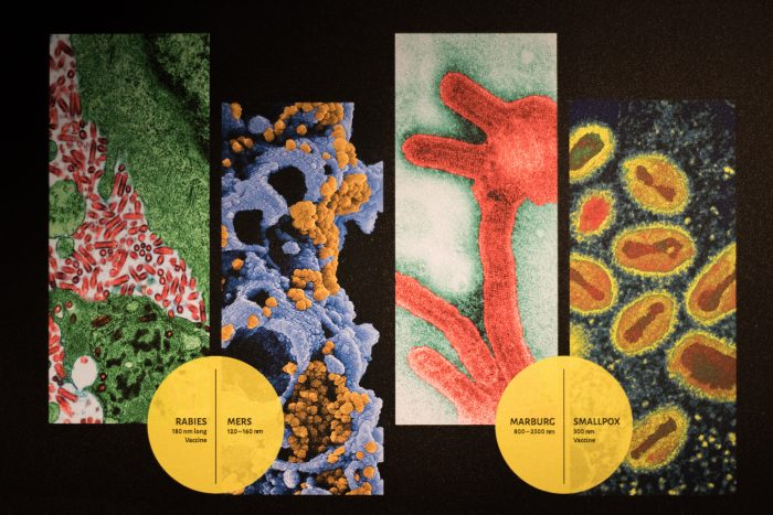 colorful slides of various viruses
