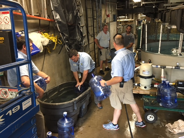 Staff pumping water into water cooler bottles