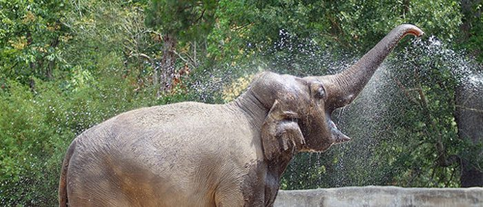 How do you tell a thirsty elephant not to take a drink?