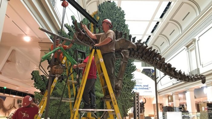 Man on ladder working on dinosaur assembly