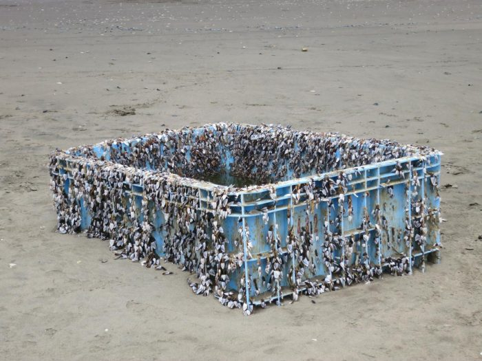 Plastic box covered with barnacles