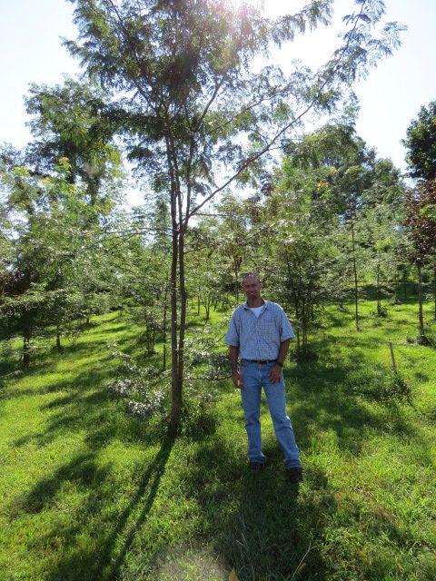 Maslanka in shade of young tree