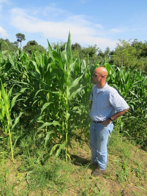 Maslanka in corn field
