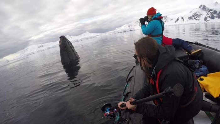 Researchers in boat photographing breaching whale