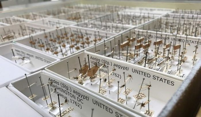 Drawers of mosquito specimens