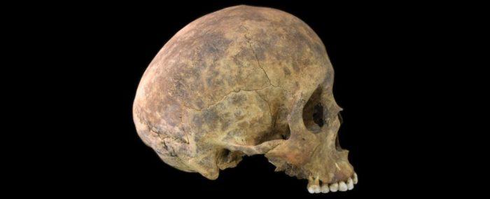 Skull photographed against black backdrop