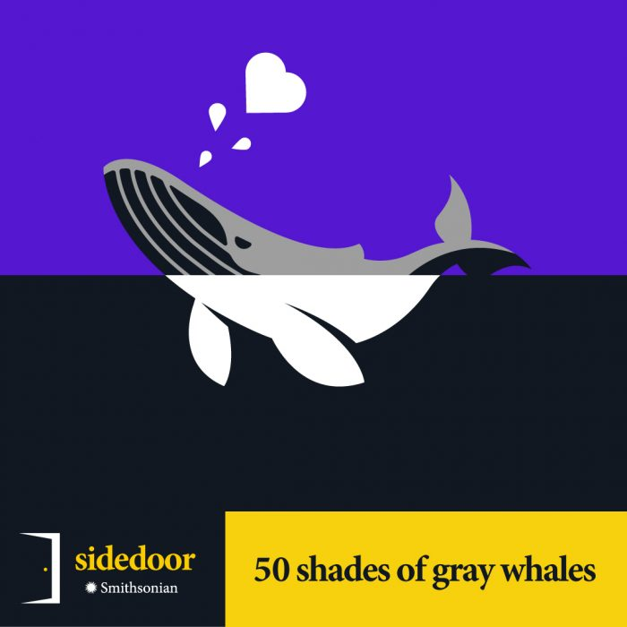 Sidedoor: 50 Shades of Gray (Whales)