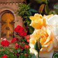 Cropped composite photos of rose garden