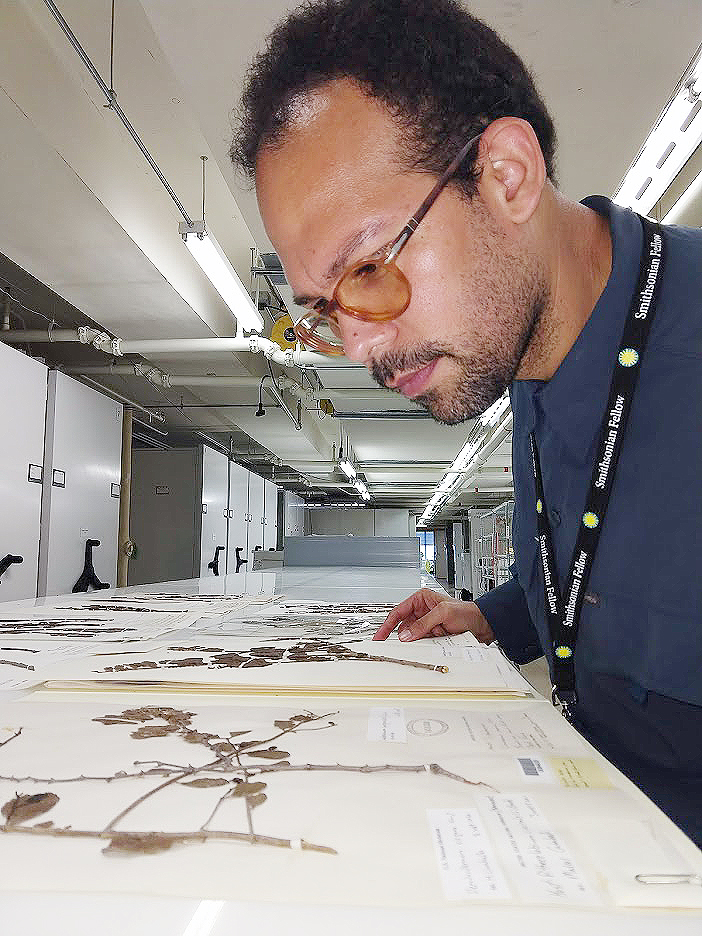 Caraballo poring over dried specimens