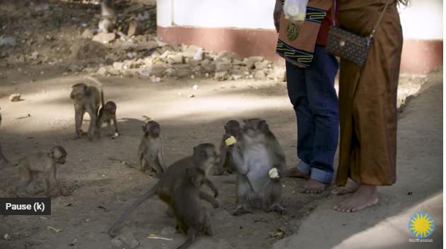 Field in Focus | Predicting Pandemics: Kawgun Cave