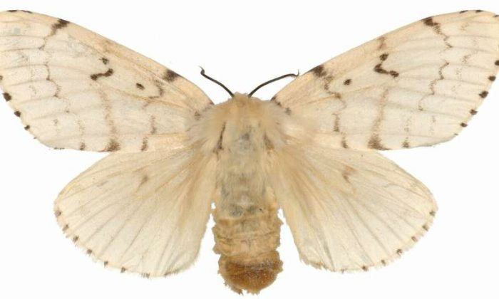 close up of specimen moth