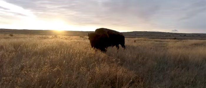 Field in Focus | Restoring America's Prairie
