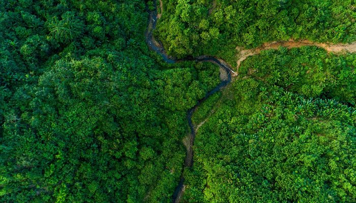 Myanmar jungle seen from above