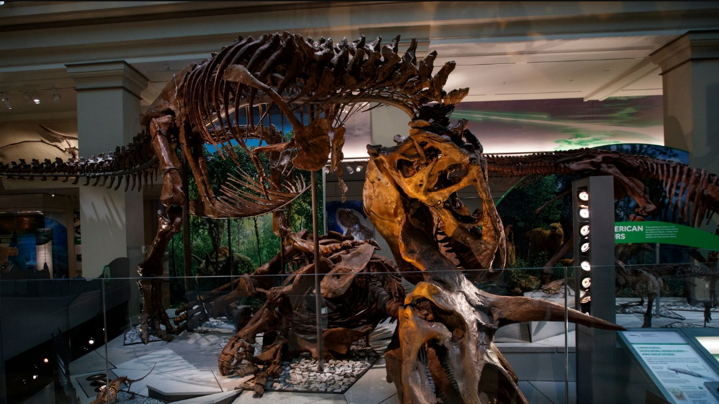 Trex exhibit at Deep Time
