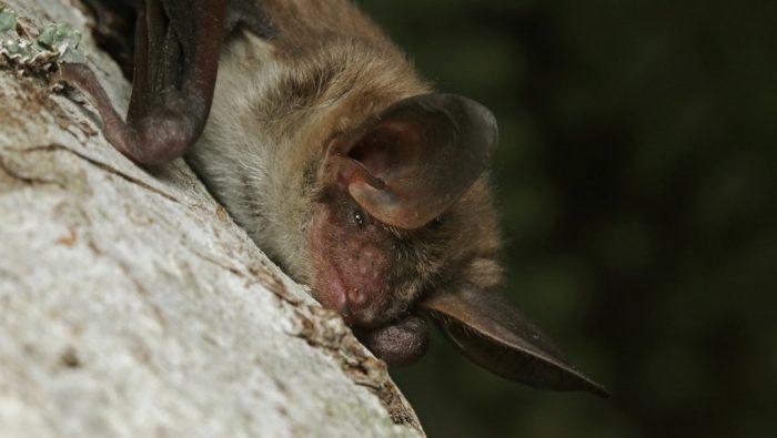 Close up of bat