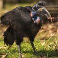 Bird with artificial beak
