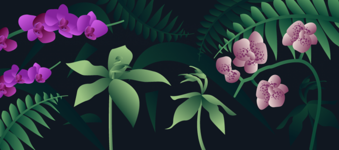 Graphic of orchids for S4.1