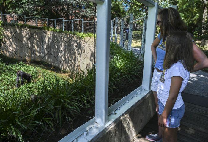 Young girl looks at Primate exhibit