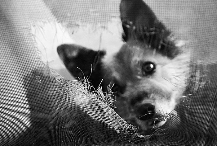 photo of dog peering through screen
