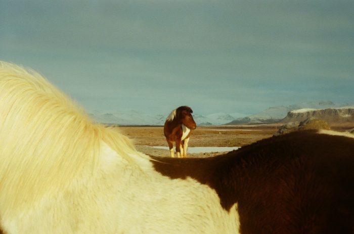pony on the beach
