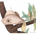 Resized drawing of extinct butterfly-like insect