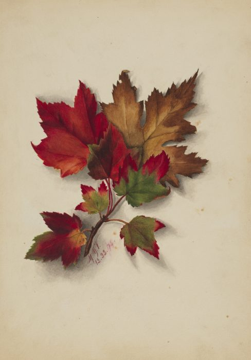 watercolor painting of autumn leaves
