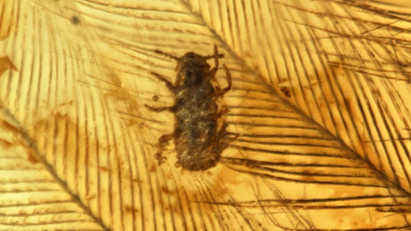 insect caught in amber