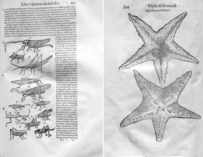 Two pages from Animailibus insectis