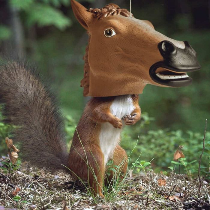 A squirrel wearing a horsehead mask