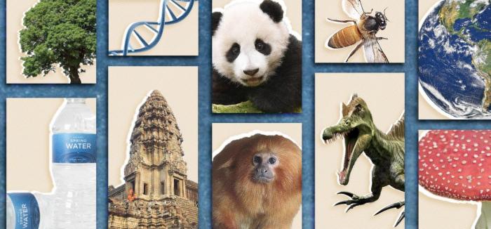Composite image of animals. etc