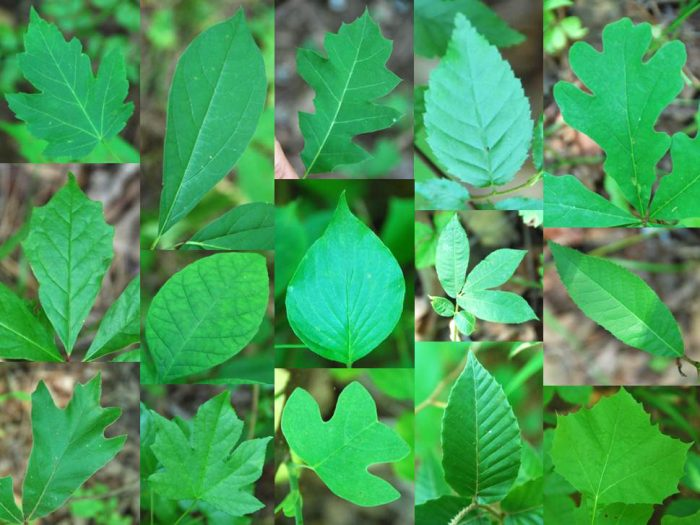 Composite photo of different green leaves