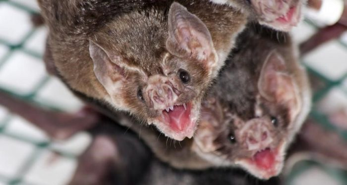Bats hanging upside down.