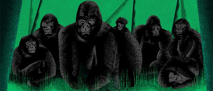 Sidedoor: The Gorilla Epidemic