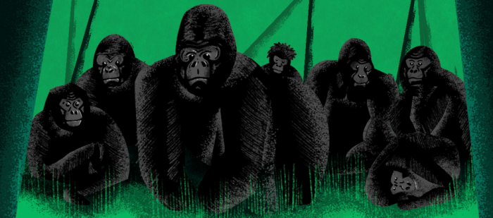 """Graphic for Sidedoor episode """"The Gorilla Epidemic"""""""