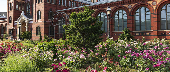 June is National Rose Gardening Month